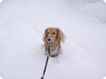 今日も雪降りですね〜