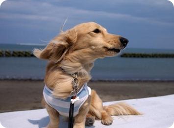 風を感じて・・・