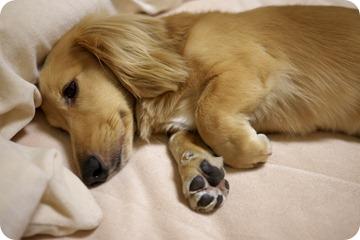 おやすみなさい・・・