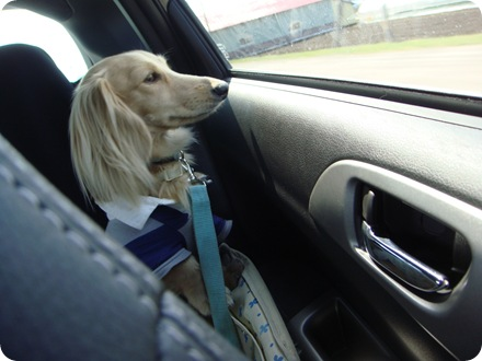 どこ行くの?
