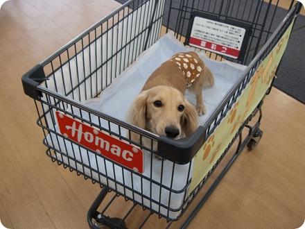 お買い物♪お買い物♪