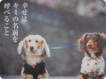 4月の犬川柳