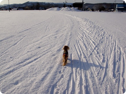 僕のスキーは?